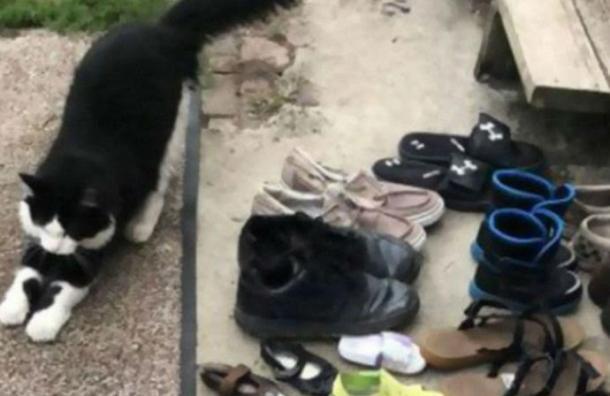 Gato roba zapatos de vecinos y su dueño crea página de Facebook para devolverlos