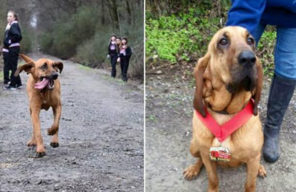 A esta perrita la dejaron salir para ir al baño y terminó corriendo una maratón